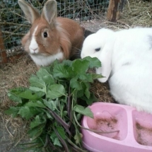Sparky_Honey_Rabbits