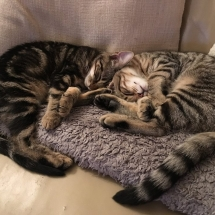 Harleston_Kittens