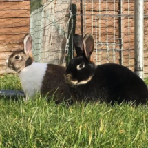 Willow_Olive_Bunnies