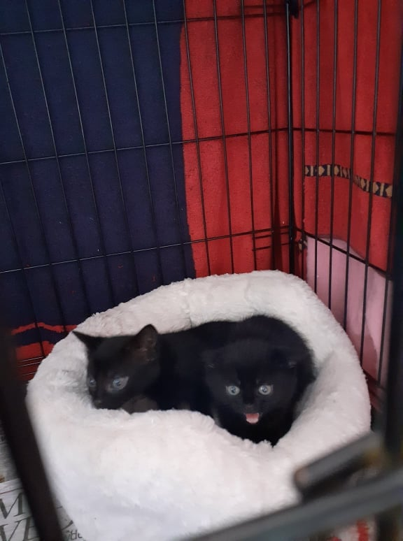 ** KITTENS ** This little family of 4 are shortly going to be in need of new homes currently only about 5 weeks old. They were born feral so are going through rehab and will be available for homing in a few weeks time. Our kittens are generally homed in pairs so that they have a playmate, they will not be homed on or near busy roads.